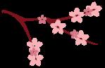 Sakura-01