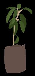 Women October 2019 Plant - Wangari Maathai-01